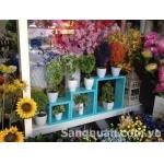sang nhượng shop hoa và đồ lưu niệm trang trí nhà