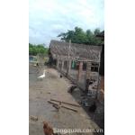 Sang trang trại vườn ao chuồng Đức Hòa Thượng, Long An
