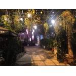 Sang quán cafe sân vườn 1B Quán Tre , Trung Mỹ Tây , Q.12